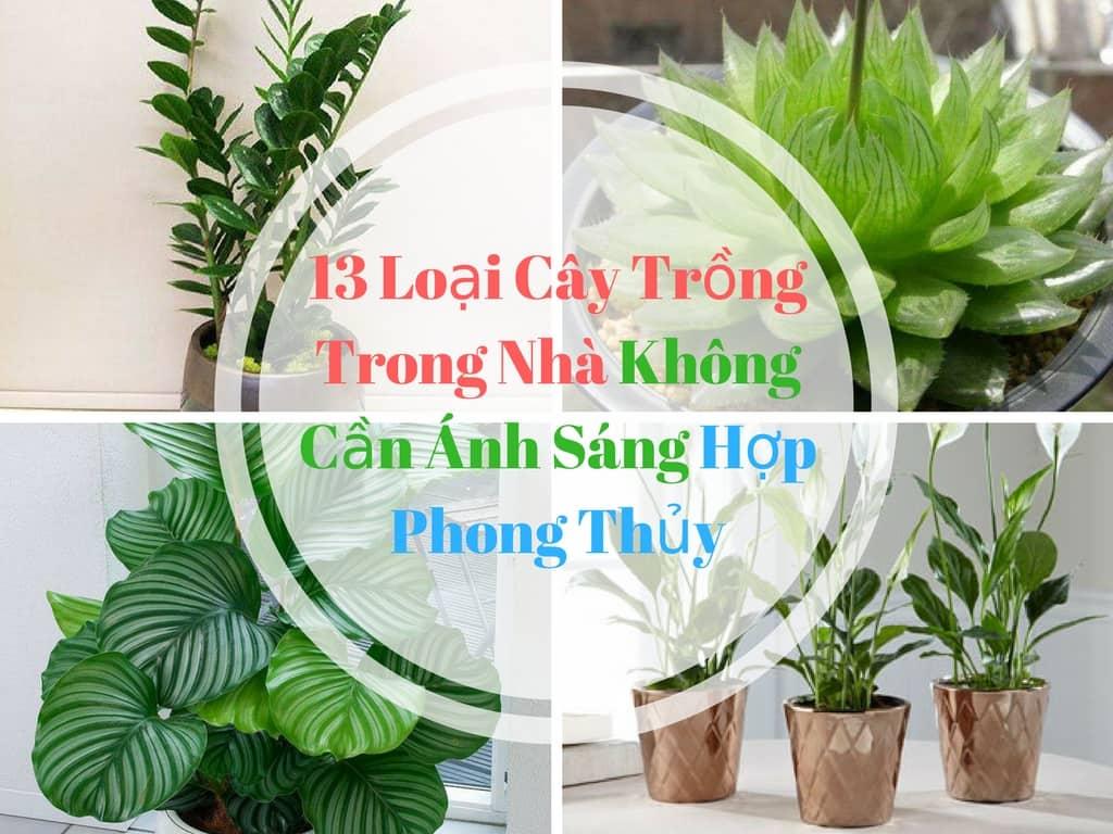 Cay-Trong-Trong-Nha-Khong-Can-anh-Sang